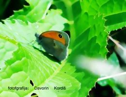 metulj-2