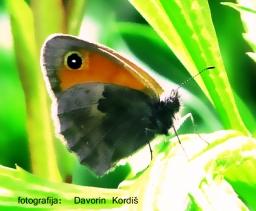 metulj1