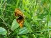 metuljoker_0
