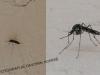 komarnovi2